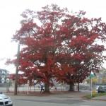 101313 Oak w Nancy DSCN0728