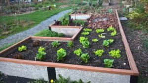 161121-sm-sues-lettuce-wp_20161121_16_18_27_pro