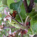 ladybugs-sm-wp_20170517_007